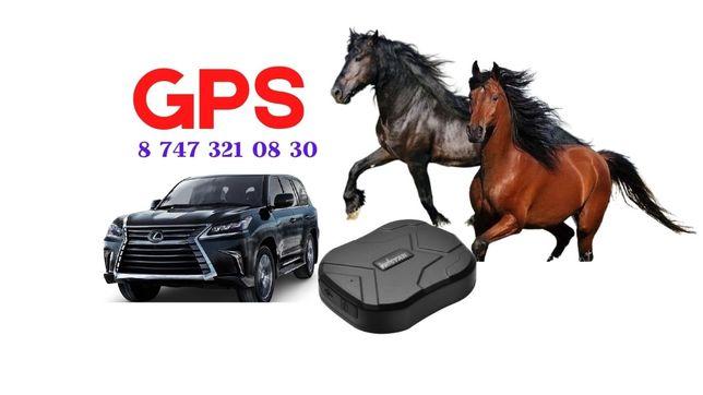 ЖПМ для лошадей, GPS трекер жылқыға
