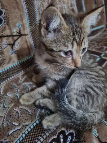 Черепашья кошечка ищет дом