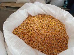 Продавам царевица пшеница  жито Колхозен пазар Варна