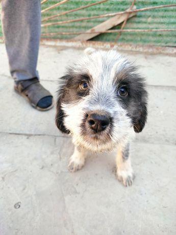 Продам щенка порода Дратхар