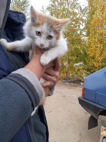 Котик в хорошие руки