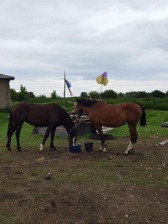 Продам лошадь (девочка)