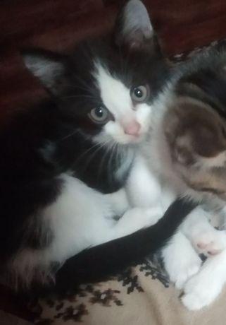 Котята девочка и мальчик