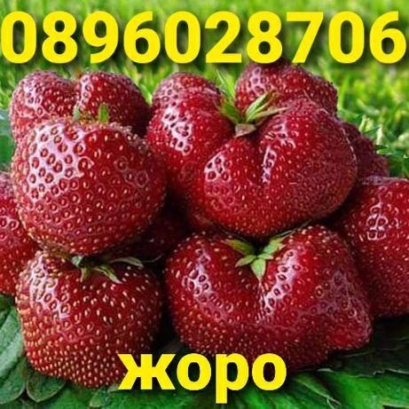 Внимани само эа ценители Расад ягоди и малини