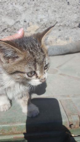 Отдам в хорошие руки котят чистые к лотку приученные
