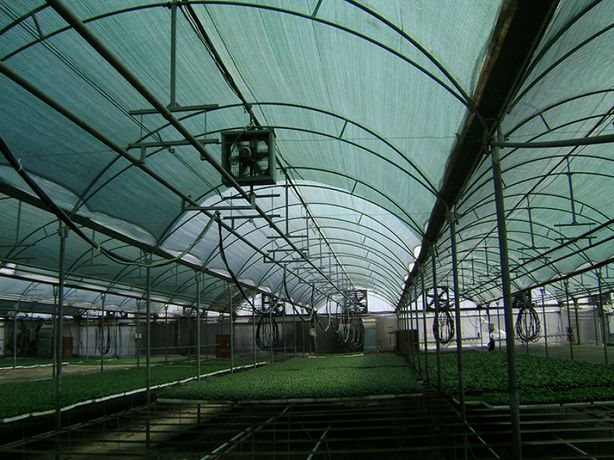 Plasa Umbrire Plante: Solarii/Sere si Gradini.Rola 2 x 50ml,Tratata UV