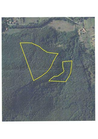 teren forestier- padure foioase matură, CF