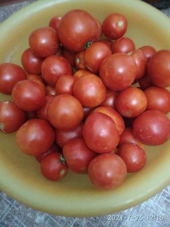 Продам помидоры домашние.