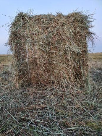 Продаём сено в рулонах