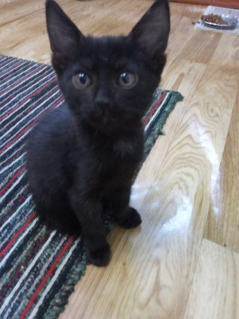 Этот котенок может быть вашим.