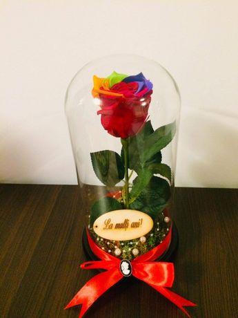 Trandafir multicolor criogenat