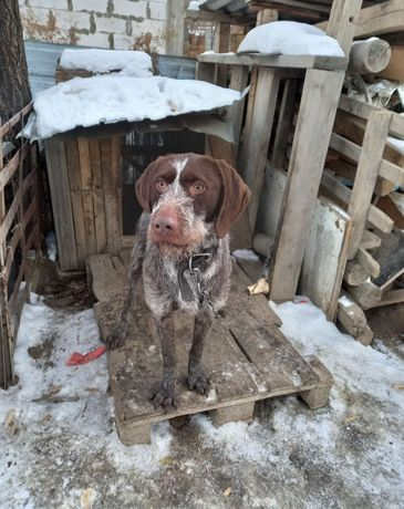Пропала собака, просим вернуть за вознаграждение