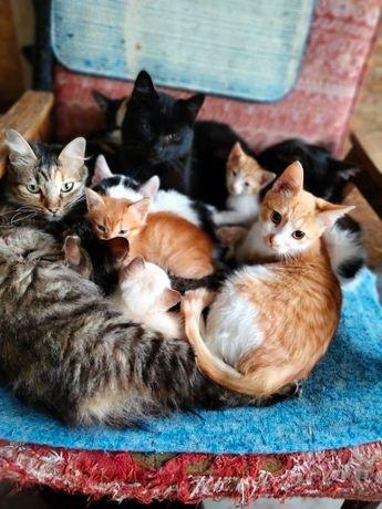 Donez  Pisici  pisici