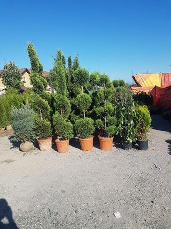 Pomi decorativi pentru grdina