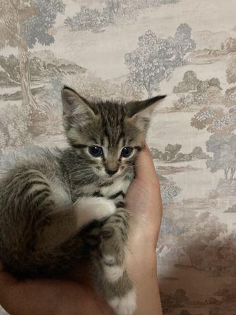 Отдам котят в хороше руки
