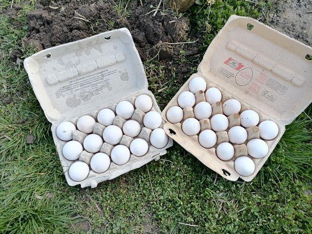 Oua de casă - 1 leu bucata (Calnic, Reșița)