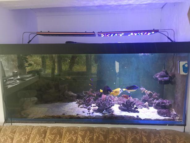 Acvariu marin cu pesti, 700 litri