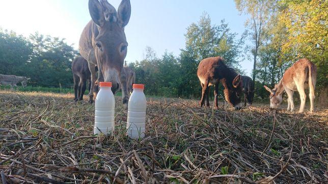Lapte crud de magarita