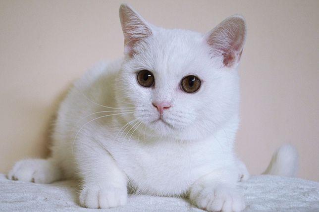 Котик, кастрат, молодой!