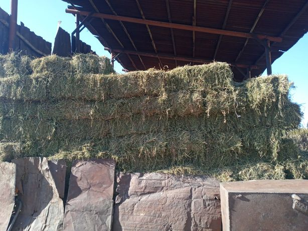 Продаю свежее  сено