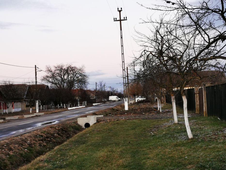 Teren intravilan/loc de casa Simand Arad 2225 mp Simand - imagine 1