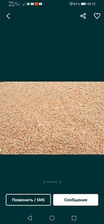 Пшеница мягкая 3 класс. Протеин 16.7