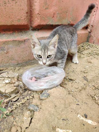 Найден котёнок серый