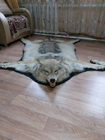 Шкура волка. Новая.