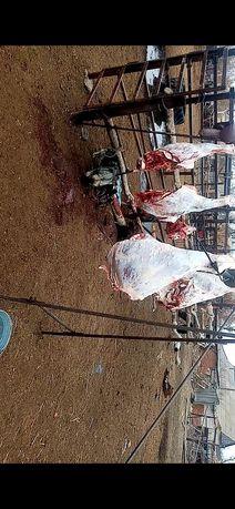 Продам мясо говядина и канина
