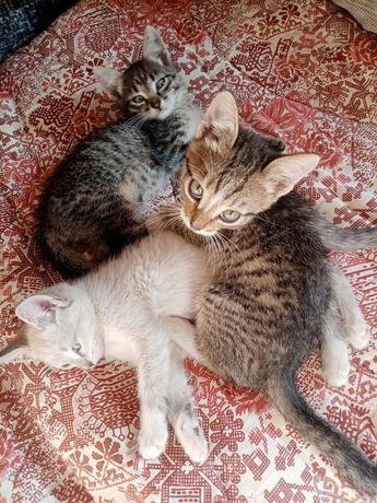 Шикарные котята малыши