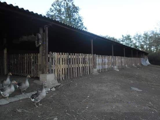 Животновъдна ферма