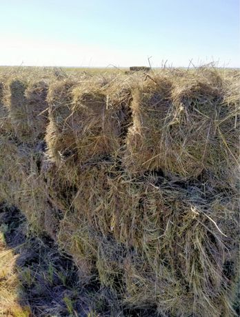 Продом  тюковое сено