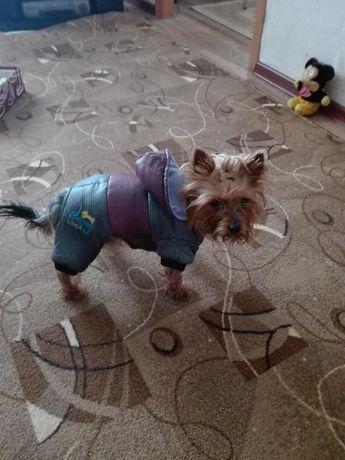 Комбинезон баллоневый для маленькой собачки