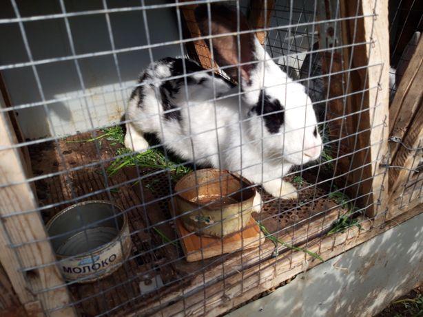 Продам кроликов в Трекино