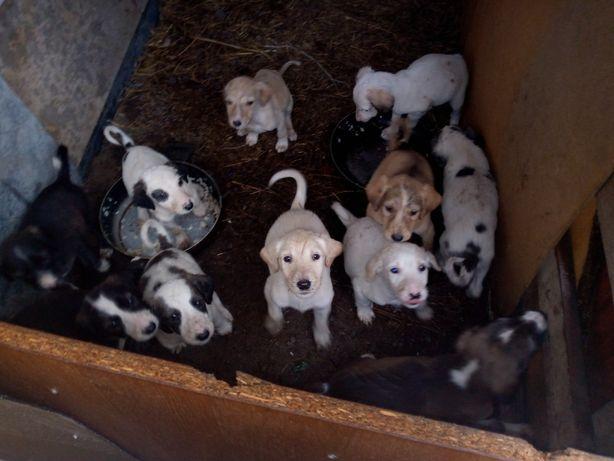 Продам щенков тазы