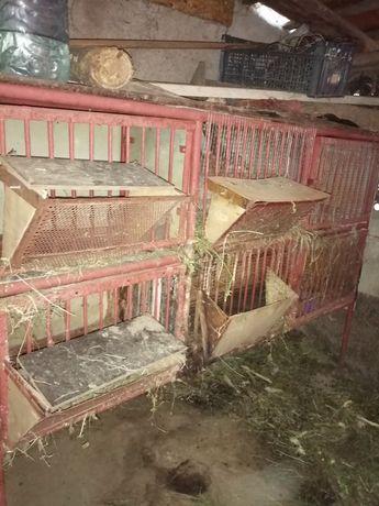 Cușcă de iepuri de casă