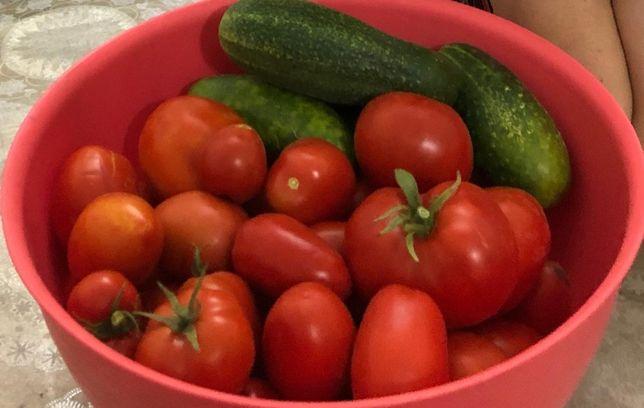 Продам домашние помидоры 280тг за кг, экологически чистые, сочные