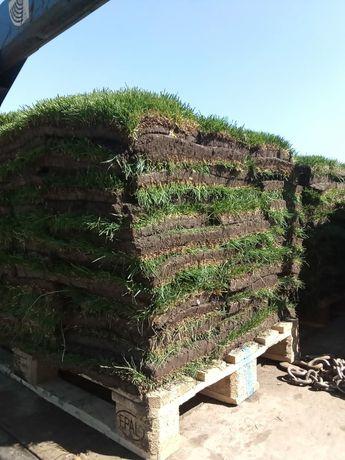 Укладка газона. Рулонный газон отличного качества.