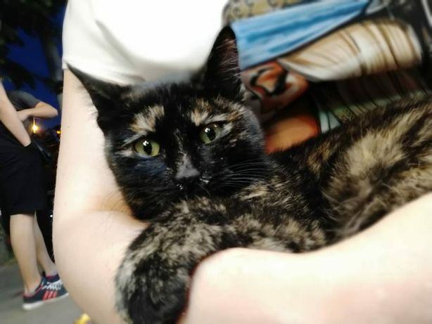 Найдена молоденькая кошечка возле аптеки Садыхан на Гоголя Муратбаева