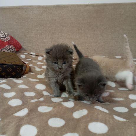 Котёнок 2 мальчик 1 девочки