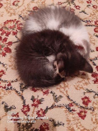 Котята девочки черно белые
