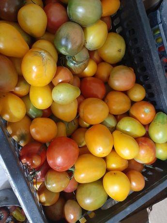 Продам помидоры домашние