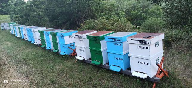 30 Stupi cu albine