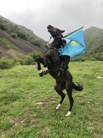 Жылкышы Пастух Чабан