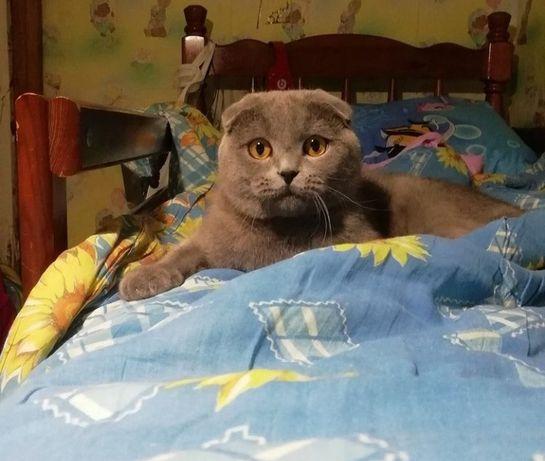 Вислоухий кот британский в заботливые руки Срочно свзяи переездом Ему