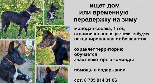 СРОЧНО ищет дом собака стерилизованная