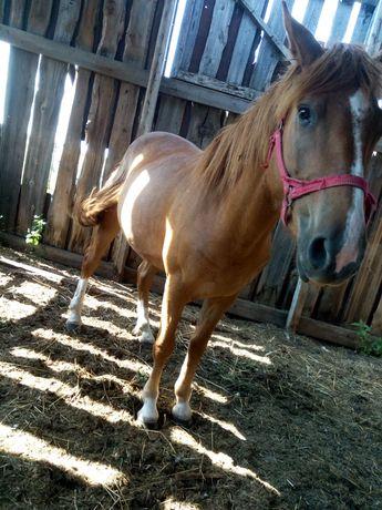 Обмен на лошадь с жеребенком