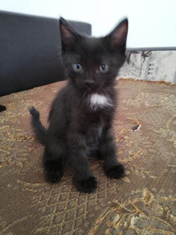 Мальчик котенок чистоплотный