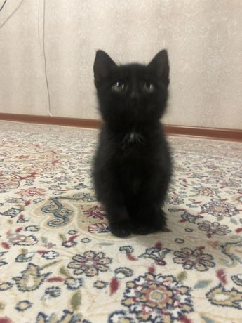 Котик мальчик