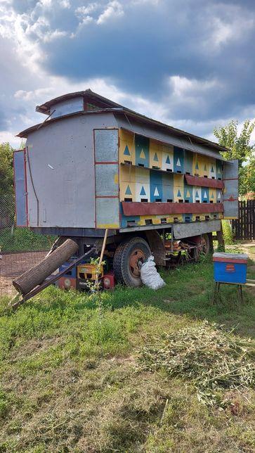 Vand pavilion apicol